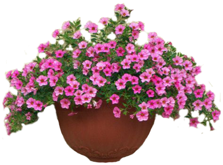 энциклопедия садовых цветов с фото:
