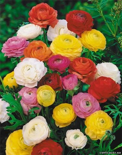 Садовые цветы с желтыми лепестками