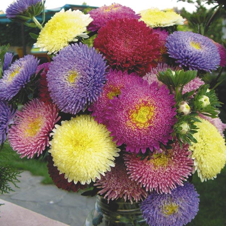 DataLife Engine Версия для печати Эти все цветы для тебя наташа.