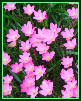 агрикола удобрение для комнатных растений в палочках