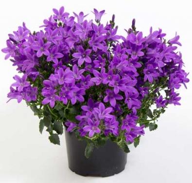 Цветы комнатные растения названия и