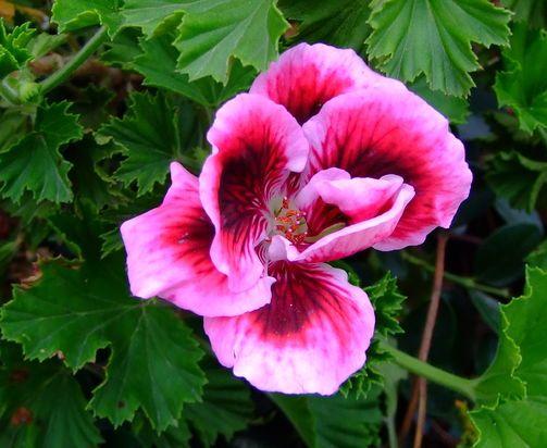 Красивые цветы для сада фото и