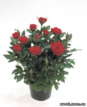 Живые цветы. b Комнатные/b b растения/b.  Материалы для флористов.