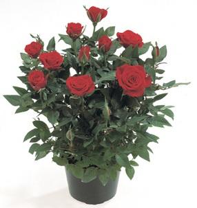 Цветы обладают прекрасными