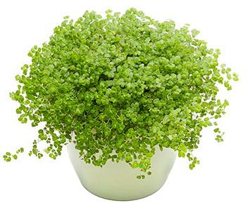 Система корневого полива Green Helper GB-002