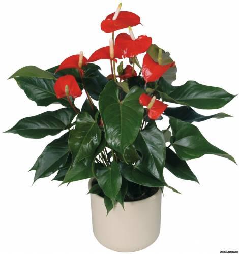домашние цветы фото и названия: