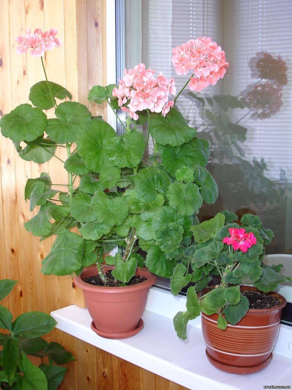 Комнатные растения фото с названиями цветов