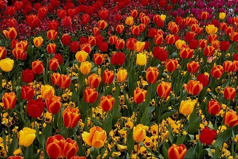 Дивная история прекрасного цветка