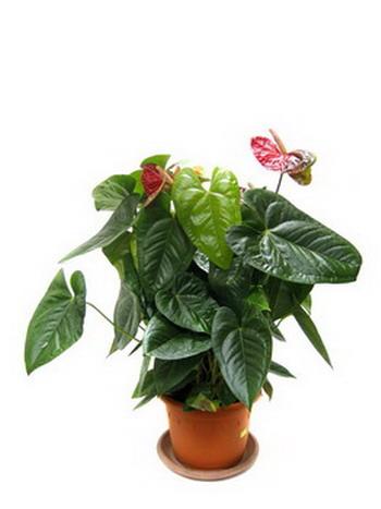 Хоть иногда поливайте растения